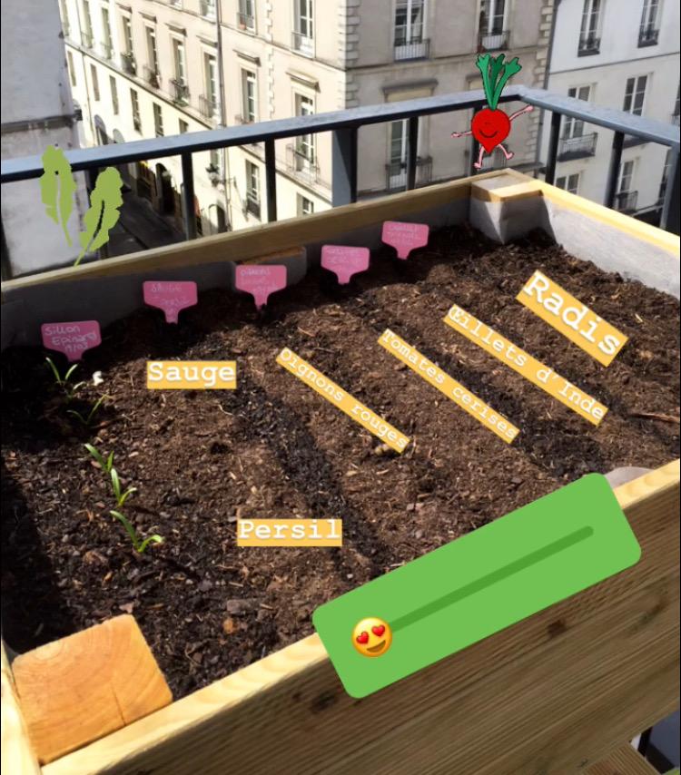 Semis de potager de balcon